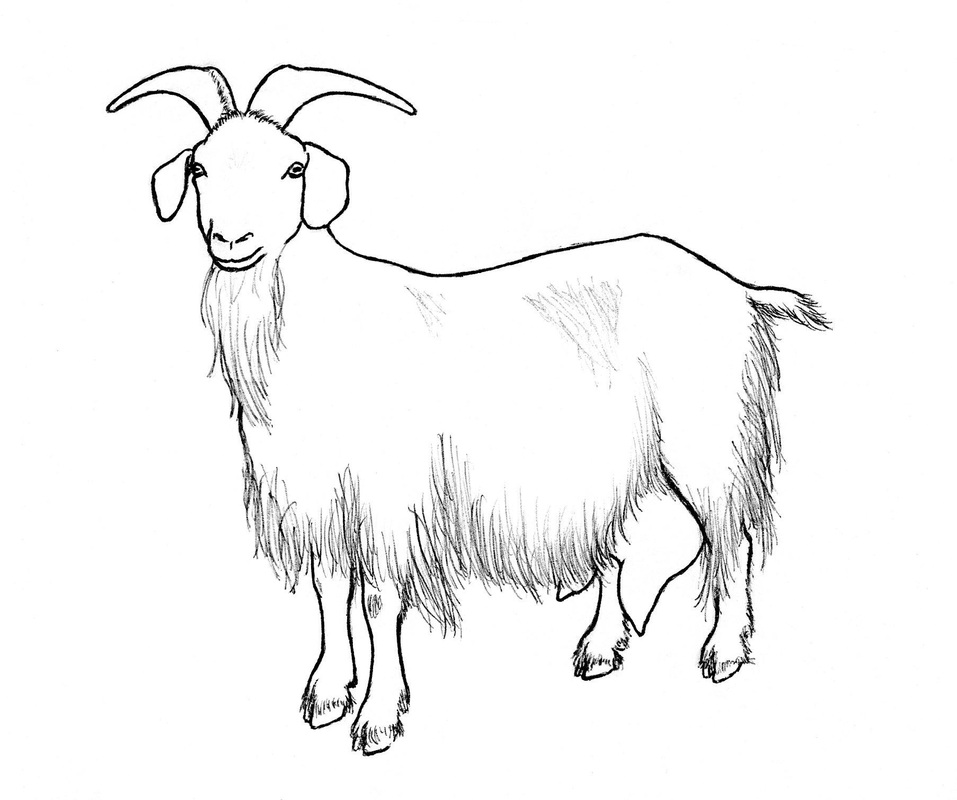 goat drawing for kids
